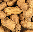 Infants at high risk for peanut allergies should be given foods containing peanuts before they reach the age of 1 year
