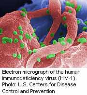 For patients with hepatitis C virus genotype 1 and HIV coinfection