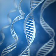 The strength of the placebo effect may depend on particular DNA