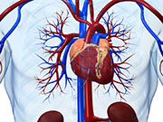In younger people with acute myocardial infarction