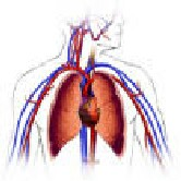 Chronic obstructive pulmonary disease is already the third leading cause of death in the world