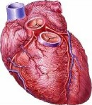 Even as the need for heart transplants increases