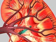 Kidneys from deceased donors that have acute injuries are frequently discarded