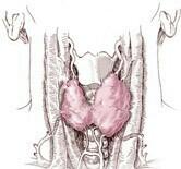 Benign thyroid nodules are common