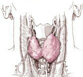 Subclinical hyperthyroidism ups risk for hip and other fractures