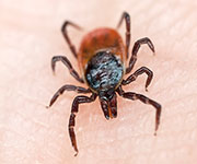 An epidemic of Rocky Mountain spotted fever among several American Indian tribes on two reservations in Arizona has led to more than $13.2 million in societal costs in nine years