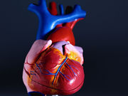 Regular doses of vitamin D3 may improve cardiac function in heart failure patients