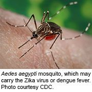 Experiments in mosquitoes suggest that bacteria may help curb the spread of the Zika virus