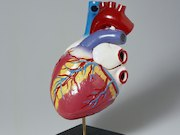 Guidelines have been developed to help optimize treatment of heart failure with reduced ejection fraction