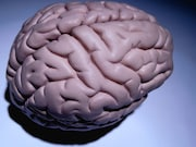 Higher serum cortisol level is associated with lower brain volumes and impaired memory in asymptomatic younger to middle-aged adults