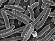 U.S. health officials say an outbreak of Escherichia coli illness from an unknown source has risen to 96 cases across five Eastern states