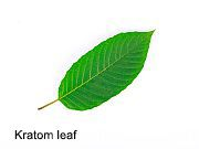 Dangerously high levels of heavy metals have been found in dozens of kratom products