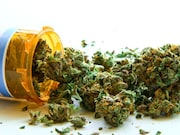 Medical marijuana laws do not appear to impact nonmedical prescription opioid use or opioid use disorder
