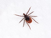 The incidence of Lyme disease increased from 2001 to 2012 in the United Kingdom