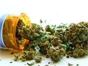 Legally dispensed marijuana products have stronger concentrations of tetrahydrocannabinol and cannabidiol than needed for chronic pain relief