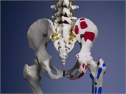 Individuals with diabetes have an increased risk for hip and nonvertebral fractures